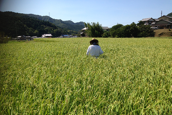 日本酒の味わいは、米で変わる。